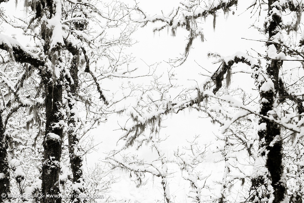 B&W winter landscape fine art photo 7