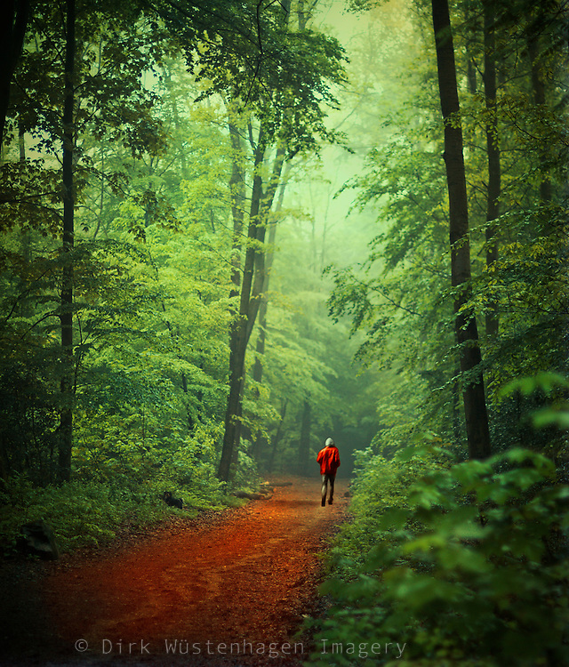 German beech tree forest in fresh green leaves with a red forest path and a person in a red rain jacket.<br />