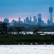 September 9, 2012 - Queens, NY : Stretching across more than 9,000 acres, Jamaica Bay Wildlife Refuge --part of the Gateway National Recreation Area -- contains fresh and salt water habitats teeming with wildlife. The 1.5-mile West Pond Trail provides a good vantage point for bird watching and boasts a picturesque view of the Manhattan skyline. Pictured here, the Manhattan skyline is visible beyond the West Pond. CREDIT: Karsten Moran for The New York Times