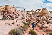 Hikers can explore red, yellow, and white sandstone erodes into fascinating shapes along the White Domes trail in Valley of Fire State Park, Nevada, USA. Starting more than 150 million years ago, great shifting sand dunes during the age of dinosaurs were compressed, uplifting, faulted, and eroded to form the park's fiery red sandstone formations. The park also boasts fascinating patterns in limestone, shale, and conglomerate rock. The park adjoins Lake Mead National Recreation Area at the Virgin River confluence, at an elevation of 2000 to 2600 feet (610-790 m), 50 miles (80 km) northeast of Las Vegas, USA. Park entry from Interstate 15 passes through the Moapa Indian Reservation.