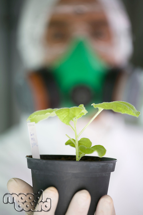 Worker in protective suit holding plant focus on plant