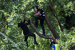 Denham, UK. 24 July, 2020. Freeman, an environmental activist from HS2 Rebellion, pursued by an enforcement agent from the National Eviction Team tries to clamber up an ancient alder tree from the river Colne to protect it from destruction in connection with works for the HS2 high-speed rail link in Denham Country Park. A large policing operation involving the Metropolitan Police, Thames Valley Police, City of London Police and Hampshire Police as well as the National Eviction Team was put in place to enable HS2 to destroy the tree.