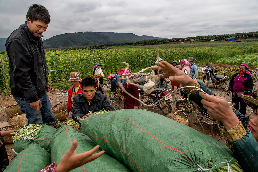 Farmers load freshly picked beans and peas onto a motorcycle cart for transport to local markets in Manhenuan village, Xishunagbanna, China.