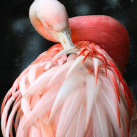 This exquisite flamingo is part of a wildlife collection.