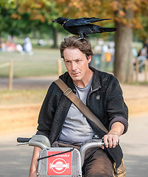 © Licensed to London News Pictures. 19/09/2020. London, UK. A cyclist got an unexpected passenger while enjoying a ride around Hyde Park today when a black bird seemed to need a short rest from flying. Members of the public enjoy the warm sunshine in London today as gatherings of over six people have now been banned by the Government after a spike in coronavirus cases. Prime Minister Boris Johnson announced yesterday that the UK was heading for a second wave with the North East already under lockdown.  Photo credit: Alex Lentati/LNP