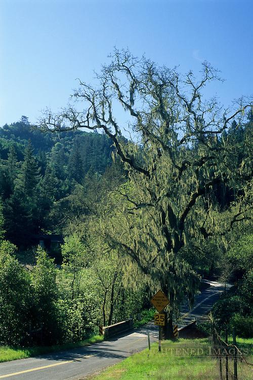 Mount Veeder Road in Spring, Napa Valley Wine Country Napa County, California