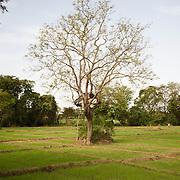 Echappée belle au Sri Lanka