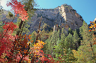 Rock surrounded by bright color - Oak Creek Canyon, AZ