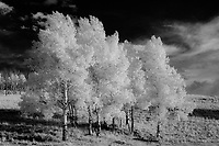 Aspens in autumn in the Rocky Mountain foothills; Park County, CO