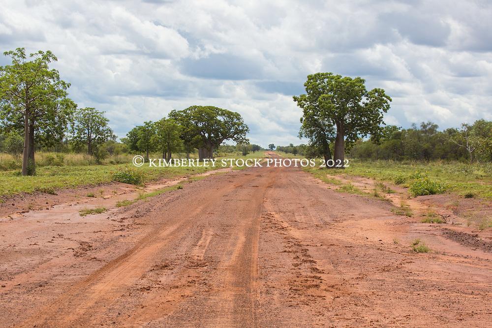 Wet season tracks in the pindan on Liveringa Station in Western Austraia's Kimberley region.