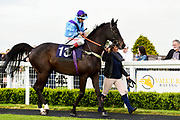 """Eugenic ridden by Franny Norton and trained by Tracey Barfoot-Saunt in the Free Tips From """"Sandstorm"""" At Valuerater.Co.Uk Handicap race.  - Mandatory by-line: Ryan Hiscott/JMP - 01/05/2019 - HORSE RACING - Bath Racecourse - Bath, England - Wednesday 1 May 2019 Race Meeting"""