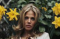 Swedish actress Britt Ekland among some daffodils, circa 1975.