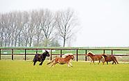 paarden serie pony's
