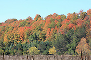 Glengary Hill, just north of Mesick, Michigan, was ablaze with color in October 2013. In this image, you can see the mullein stalks in the foreground meadow that have reached the end of their life cycle.