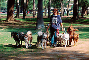 ARGENTINA, BUENOS AIRES, professional dogwalker or 'pasaperros' employed by apartment dwellers