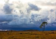 Hartland Moor National Nature Reserve. Isle of Purbeck, Dorset, UK.