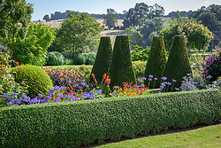 The parterre at Pettifers with Dahlia 'Moonshine' syn 'Moonfire', agapanthus and gladioli. Yew pillars -Taxus baccata - with box hedging - Buxus sempervirens.