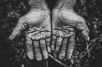 A farmer's hands in Hanoi, Vietnam.
