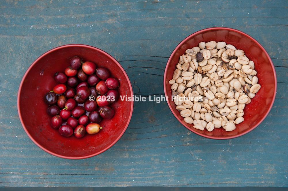 Kona Coffee Bean Bowls