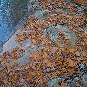Autumn Leaves, Stream