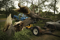 June 12, 2017 - Marine On St. Croix, MN, U.S.A - One tree that fell on John Haluptzok's property on Old Hornsby St. in Forest Lake took out two vehicles and a toy truck.     ]  JEFF WHEELER • jeff.wheeler@startribune.com ....Hail on Sunday morning damaged some fruit growers' crops around Forest Lake that their entire Pick Your Own crop is a complete loss. At Natura Farms, the strawberries were perhaps only two weeks from harvest, said field manager Kirstin Geerdes as she looked at damage Monday afternoon, June 12, 2017 on the farm in Marine on St. Croix. ''That's farming,'' she said. (Credit Image: © Jeff Wheeler/Minneapolis Star Tribune via ZUMA Wire)