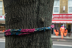 London, UK. 22 January, 2020. A knitted neck warmer around a tree close to works for the HS2 high-speed rail line near Euston station. There has been considerable land purchase and clearance in the Euston area, requiring the destruction of dozens of mature plane trees. Local residents and environmentalists campaigned to save the trees in 2018.