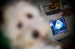 A pet dog is scanned during a diagnosis at Arnwood Veterinary Surgery, Nottingham, England, UK.