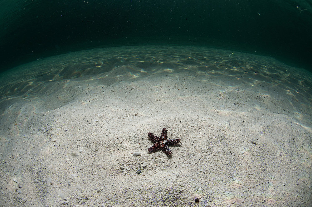 Lone sea star on the sand in the Bahamas.