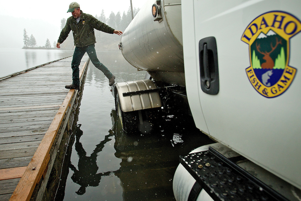 John Rankin, a fish hatchery manager for Idaho Fish and Game, steps back onto the dock after releasing rainbow trout from a tanker truck.