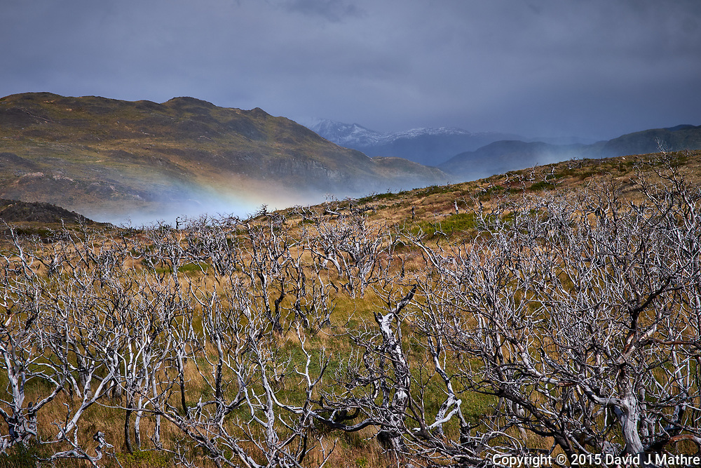 Rainbow and Dead Trees after a Forest Fire in del Paine National Park. Image taken with a Fuji X-T1 camera and Zeiss 32 mm f/1.8 lens.