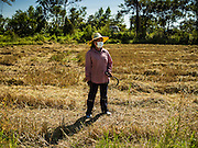 "08 DECEMBER 2015 - KO WAI, NAKHON NAYOK, THAILAND:  A woman walks through her just harvested rice paddy during the rice harvest in Nakhon Nayok province, about two hours north of Bangkok. Thai agricultural officials expect rice prices to go up by as much as 15% as global production of rice is cut by the Pacific Ocean El Niño weather pattern. Thailand's rice production is expected to drop in the coming year. Persistent drought has reduced the main crop, currently being harvested, and the military government has ordered farmers not to plant a second crop of ""dry season"" rice to conserve Thailand's dwindling supply of water. Thailand's water reservoirs are at their lowest seasonal levels in recent memory and little rain is expected during the dry season, which lasts until June.   PHOTO BY JACK KURTZ"