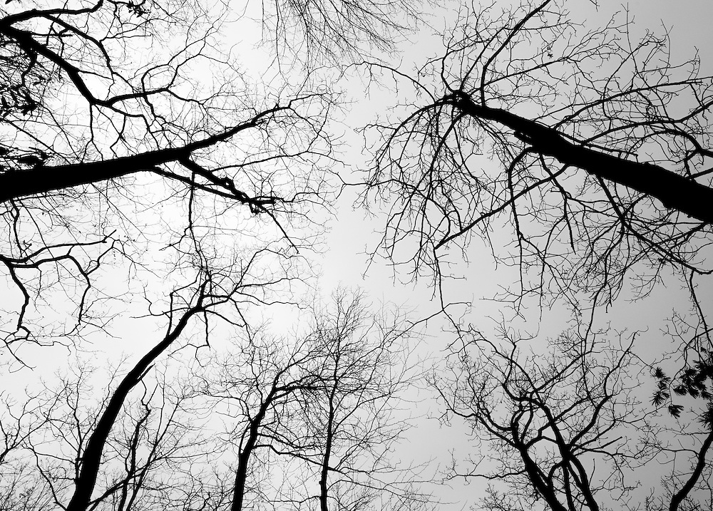 Pattern of tree branches during winter