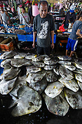Longfin Spadefish (Platax teira)<br /> Bos Wesen Market<br /> Sorong<br /> West Papua<br /> Indonesia