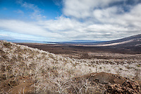 View across Isabella Isalnd, Galapagos