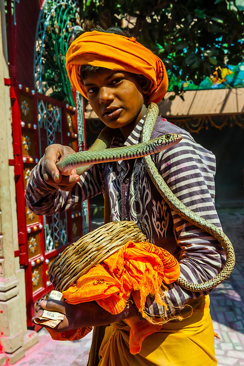 A young snake chamer during the Holi Festival celebration (Festival of Colors) outside the Banke Bihari Temple, Vrindavan, near Mathura, Uttar Pradesh, India.