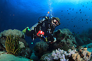 A diver swims among the colourful coral and marine life in the waters around Puerto Galera, the Philippines<br />
