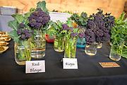 Purple Sprouting Broccoli x Collards, Brassica oleracea Breeder: John Navazio, Johnny's Selected Seeds<br /> Farmers: Midori Farm and 47th Avenue Farm<br /> Chef: Maya Lovelace, Mae and Yonder