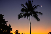 Sunset, Coconut Palm Trees<br />