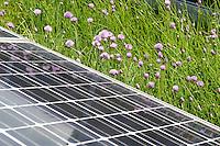24 MAY 2005, BERLIN/GERMANY:<br /> Solaranlage auf dem Dach des Willy-Brandt-Hauses<br /> IMAGE: 20050524-01-019<br /> KEYWORDS: Photovoltaik, Sonnenenergie, Solarenergie, Umwelt, environment, Energie, Strom, Blumen, flowers, wiese, Dachbegruenung, Dachbegrünung