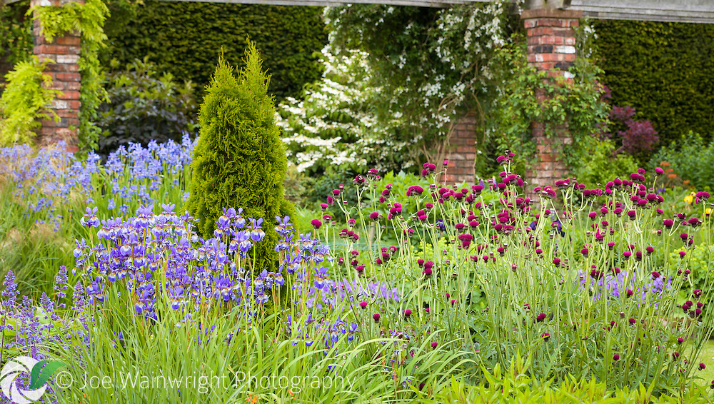 An early summer border at Abbeywood Gardens, Cheshire - photographed in June