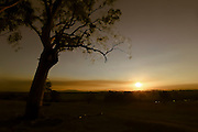 Australian landscape with gum tree in the foreground with the last light of day smeared across the horizon