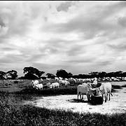 DAILY VENEZUELA / VENEZUELA COTIDIANA.Libertad, Barinas State Venezuela 2002.(Copyright © Aaron Sosa)