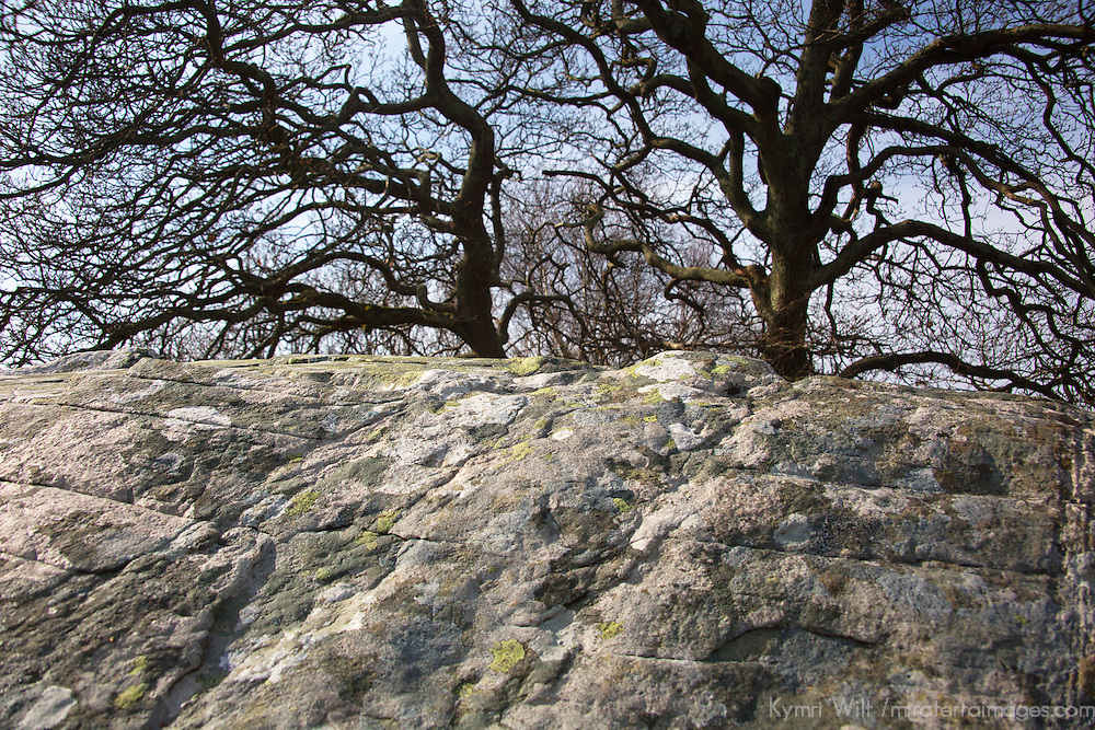 Europe, Great Britain, Wales. Dyffryn Ardudwy stone and tree.