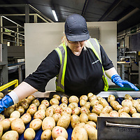 Branston Potatoes