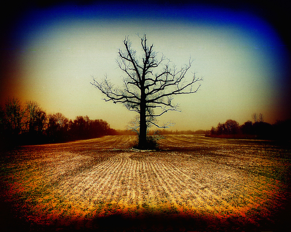 A single tree in the middle of a field in rural New Jersey.