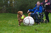 Playing Football | Dogs for the Disabled