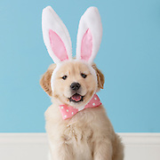 Easter Dogs and Puppies