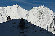 Snowy ridge and small pine tree below col de Pause, near Couflens, Ariege, Midi-Pyrenees, France..