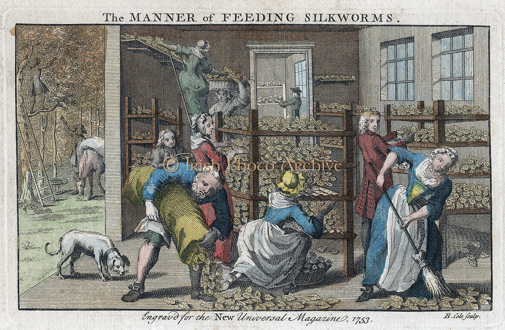 Silkworm farm, showing interior of rearing house or Magnangerie and collection of mulberry leaves (1) on which caterpillars (worms) were fed. From 'The Universal Magazine', London, 1753. Engraving.