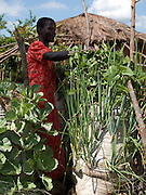 Akia Joyce is a member of Aliast A Jerusalem group, part of Send a Cow, Uganda. Skills like growing vegetables in a sack garden, as seen here, have transformed her life. Her husband was inspired by her efforts and is now also receiving training too. Together they grow enough food to feed their family a balanced diet, with enough surplus to sell at market. There recent orange tree grafting is turning in to a profitble business.
